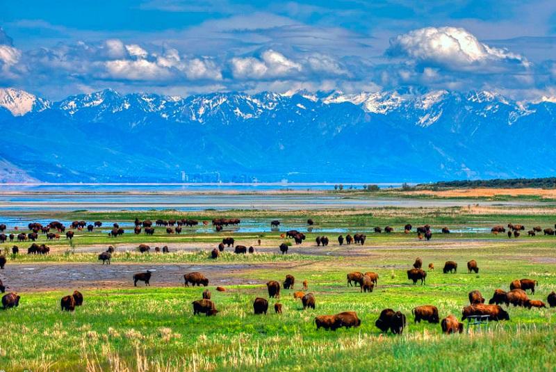 Остров антилоп и бизонов