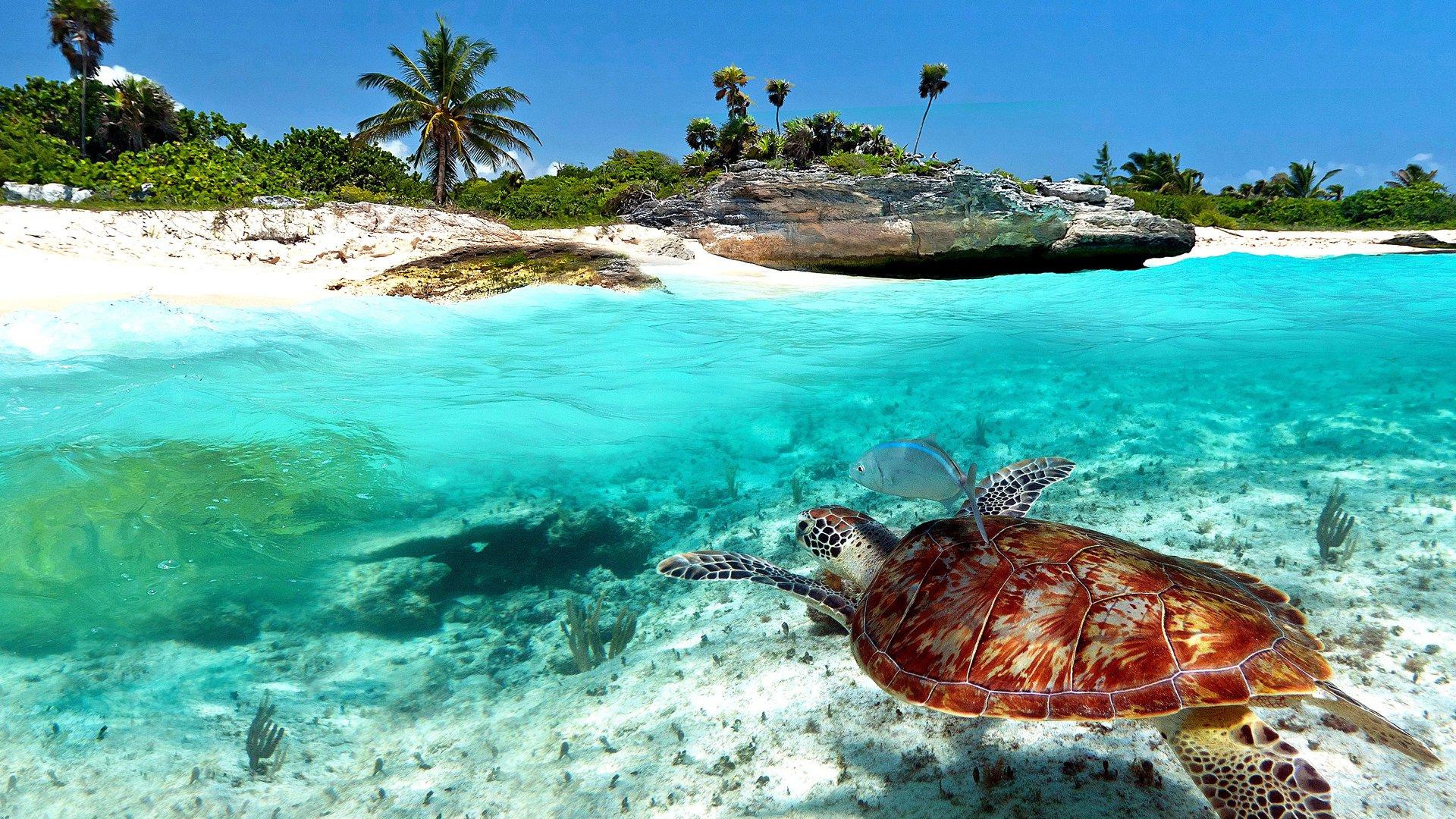 a7036dc0dd7ac Лучшие пляжи Мексики: Akumal, Tulum, Lovers, Cozumel, Playa-del ...